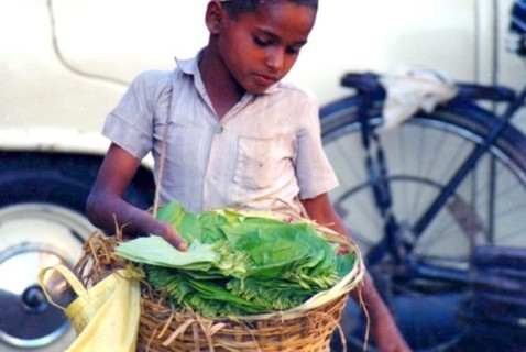 betel nut vendor kid, India
